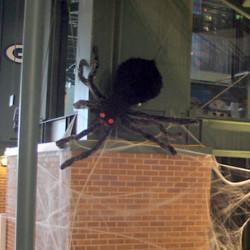 1035 B Large Spider 3d